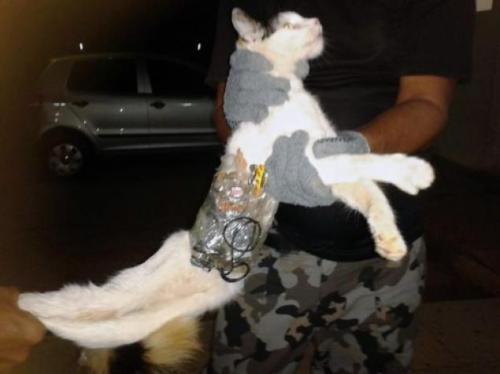 Jail break cat.